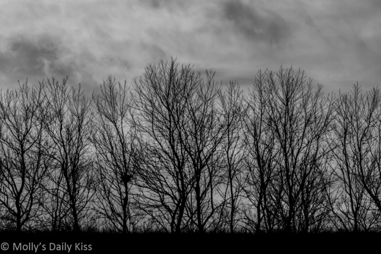 Trees on a black and grey background in post titled The Sound of the Gun
